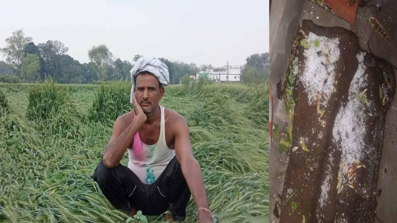 वाराणसी: चक्रवाती तूफान और ओलावृष्टि से फसलों की भारी बबार्दी, किसान की किसानी हुई तबाह