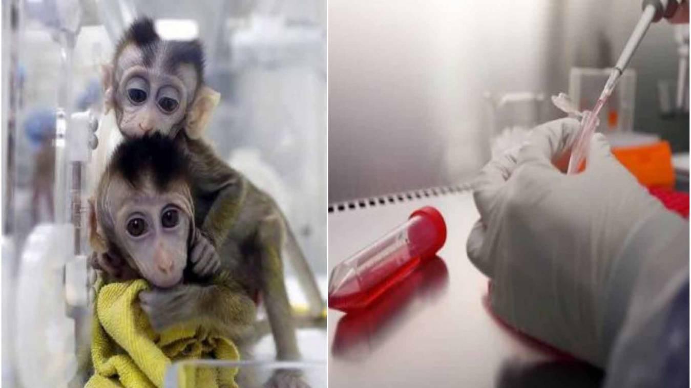Good News: बंदरों पर कोरोना वायरस वैक्सीन का ट्रायल सफल, इंसानों के इलाज में सफलता!