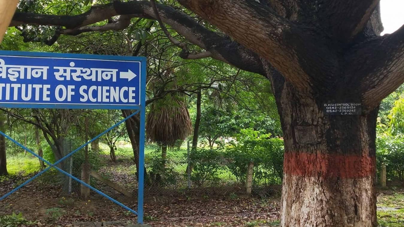 वाराणसी Exclusive: बीएचयू प्रशासन हुआ बेपरवाह, नहीं सुनाई दे रही बेजुबान पेड़ों की कराह