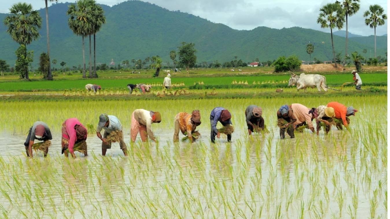वाराणसी: धान की फसल बेचने को किसान नहीं पहुंच रहे मंडिया